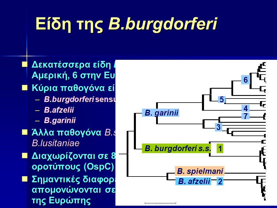 Αντισωματική απάντηση Αντισώματα ανιχνεύονται: 1 ο στάδιο στο 20-50% των ασθενών (FlaB, OspC, DbpA, BmpA, VlsE) 2 ο στάδιο στο 70-90% των ασθενών (p39, p58) 3 ο στάδιο στο 100% των ασθενών (p83/100, p58, p43, p39, p30)