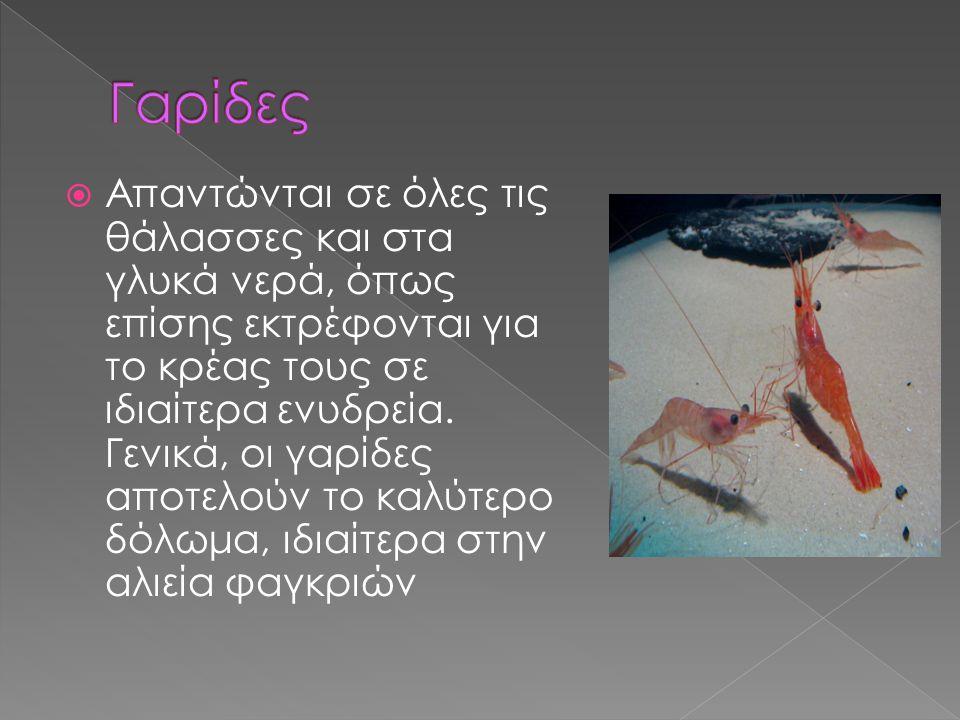  Γενικά ανήκουν στη τάξη των αστακιδών. Το χαρακτηριστικότερο είδος είναι η κοινή γαρίδα, όπως και η καραβίδα. Οι γαρίδες ζουν αποκλειστικά στη θάλασ