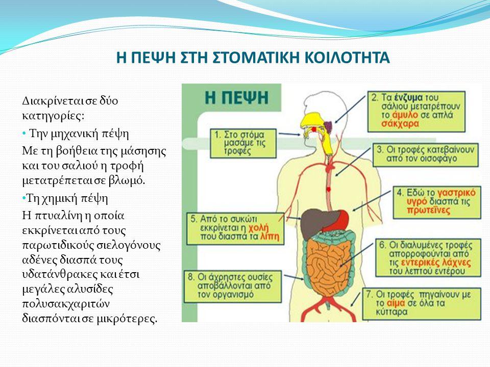 Ο ΦΑΡΥΓΓΑΣ Ο φάρυγγας είναι ίνομυώδης σωλήνας, μήκους 15cm, που συνδέει την στοματική κοιλότητα με τον οισοφάγο.