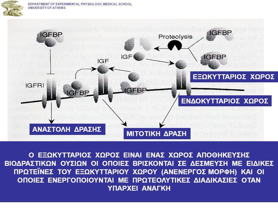 DEPARTMENT OF EXPERIMENTAL PHYSIOLOGY, MEDICAL SCHOOL, UNIVERSITY OF ATHENS ΜΙΤΟΤΙΚΗ ΔΡΑΣΗ ΑΝΑΣΤΟΛΗ ΔΡΑΣΗΣ ΕΝΔΟΚΥΤΤΑΡΙΟΣ ΧΩΡΟΣ ΕΞΩΚΥΤΤΑΡΙΟΣ ΧΩΡΟΣ Ο ΕΞΩΚΥΤΤΑΡΙΟΣ ΧΩΡΟΣ ΕΙΝΑΙ ΕΝΑΣ ΧΩΡΟΣ ΑΠΟΘΗΚΕΥΣΗΣ ΒΙΟΔΡΑΣΤΙΚΩΝ ΟΥΣΙΩΝ ΟΙ ΟΠΟΙΕΣ ΒΡΙΣΚΟΝΤΑΙ ΣΕ ΔΕΣΜΕΥΣΗ ΜΕ ΕΙΔΙΚΕΣ ΠΡΩΤΕΪΝΕΣ ΤΟΥ ΕΞΩΚΥΤΤΑΡΙΟΥ ΧΩΡΟΥ (ΑΝΕΝΕΡΓOΣ ΜΟΡΦΗ) ΚΑΙ ΟΙ ΟΠΟΙΕΣ ΕΝΕΡΓΟΠΟΙΟΥΝΤΑΙ ΜΕ ΠΡΩΤΕΟΛΥΤΙΚΕΣ ΔΙΑΔΙΚΑΣΙΕΣ ΟΤΑΝ ΥΠΑΡΧΕΙ ΑΝΑΓΚΗ