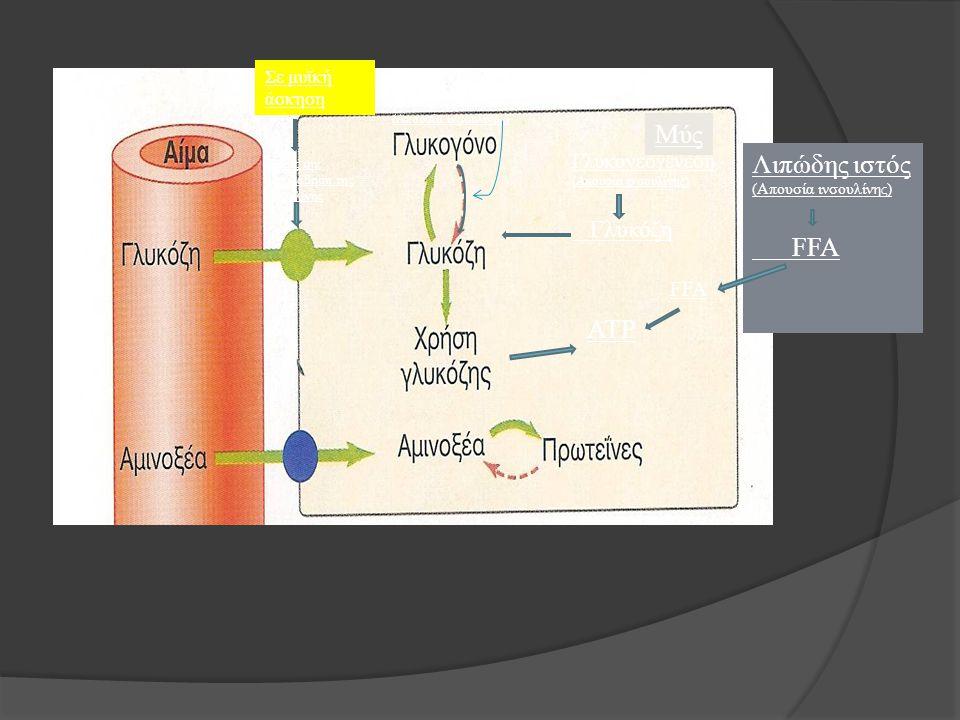 Γλυκονεογένεση (Απουσία ινσουλίνης) Γλυκόζη Λιπώδης ιστός (Απουσία ινσουλίνης) FFA ATP (Απουσία ινσουλίνης) Μύς Σε μυϊκή άσκηση Χωρίς την μεσολάβηση τ