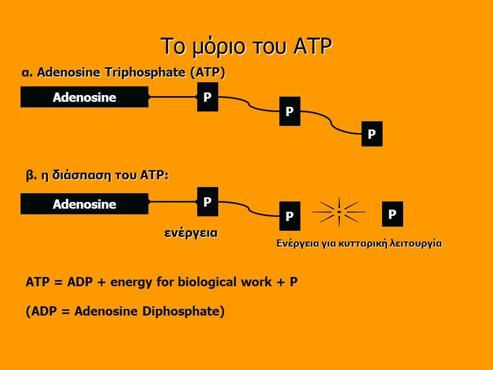 Το μόριο του ATP Adenosine Adenosine ενέργεια Adenosine Triphosphate (ATP) α.