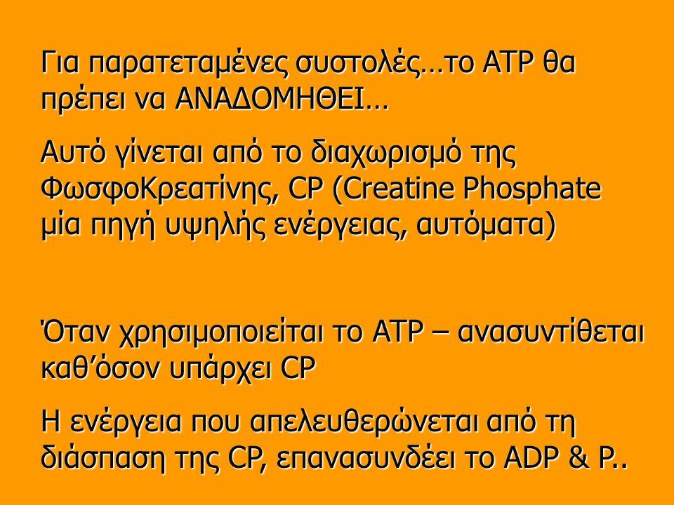 Για παρατεταμένες συστολές…το ATP θα πρέπει να ΑΝΑΔΟΜΗΘΕΙ… Αυτό γίνεται από το διαχωρισμό της ΦωσφοΚρεατίνης, CP (Creatine Phosphate μία πηγή υψηλής ενέργειας, αυτόματα) Όταν χρησιμοποιείται το ATP – ανασυντίθεται καθ'όσον υπάρχει CP Η ενέργεια που απελευθερώνεται από τη διάσπαση της CP, επανασυνδέει το ADP & P..