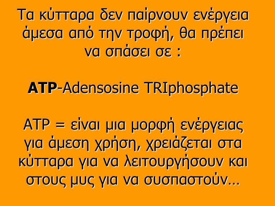 Τα κύτταρα δεν παίρνουν ενέργεια άμεσα από την τροφή, θα πρέπει να σπάσει σε : ATP-Adensosine TRIphosphate ATP = είναι μια μορφή ενέργειας για άμεση χρήση, χρειάζεται στα κύτταρα για να λειτουργήσουν και στους μυς για να συσπαστούν…