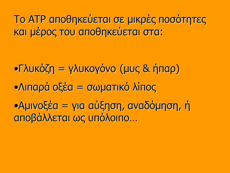 Το ATP αποθηκεύεται σε μικρές ποσότητες και μέρος του αποθηκεύεται στα: Γλυκόζη = γλυκογόνο (μυς & ήπαρ)Γλυκόζη = γλυκογόνο (μυς & ήπαρ) Λιπαρά οξέα = σωματικό λίποςΛιπαρά οξέα = σωματικό λίπος Αμινοξέα = για αύξηση, αναδόμηση, ή αποβάλλεται ως υπόλοιπο…Αμινοξέα = για αύξηση, αναδόμηση, ή αποβάλλεται ως υπόλοιπο…