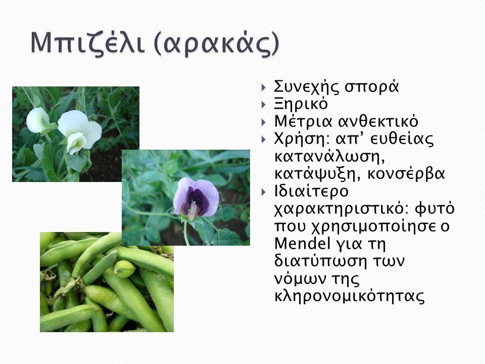  Συνεχής σπορά  Ξηρικό  Μέτρια ανθεκτικό  Χρήση: απ' ευθείας κατανάλωση, κατάψυξη, κονσέρβα  Ιδιαίτερο χαρακτηριστικό: φυτό που χρησιμοποίησε ο M