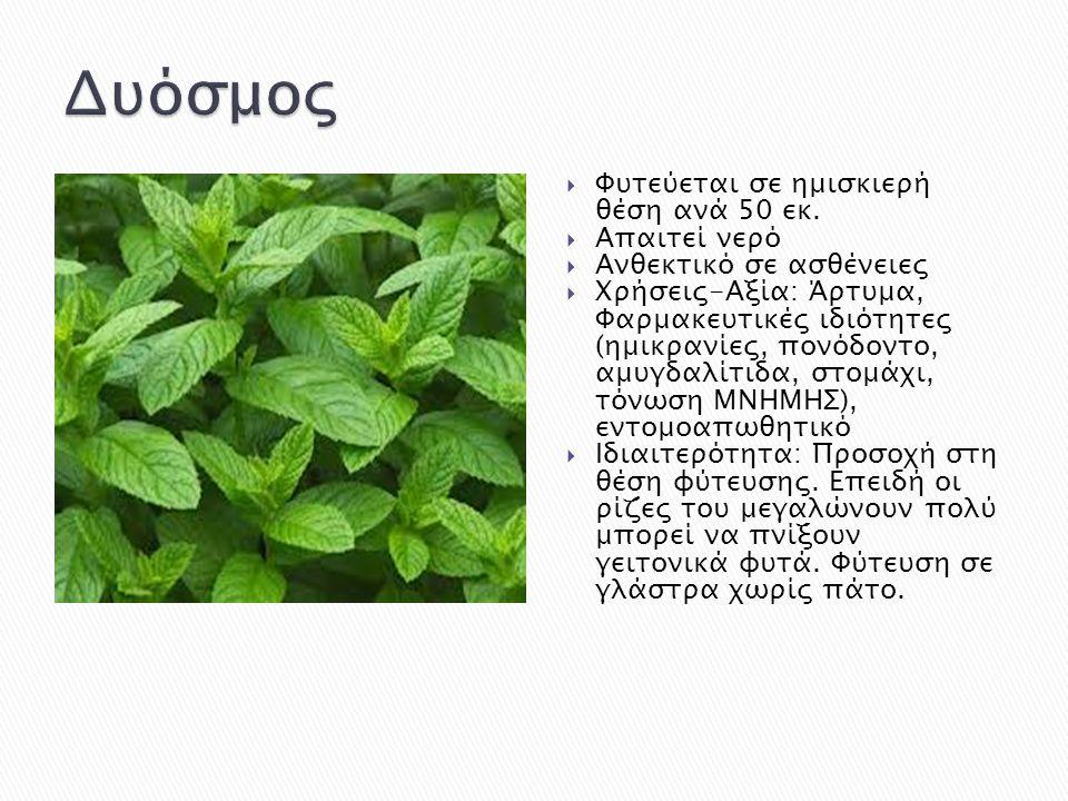  Φυτεύεται σε ημισκιερή θέση ανά 50 εκ.  Απαιτεί νερό  Ανθεκτικό σε ασθένειες  Χρήσεις-Αξία: Άρτυμα, Φαρμακευτικές ιδιότητες (ημικρανίες, πονόδοντ