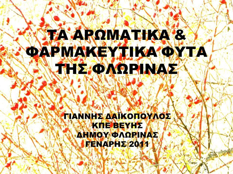 ΣΠΑΘΟΧΟΡΤΟ ή ΒΑΛΣΑΜΟ (Hypericum perforatum) αντιμικροβιακό επουλωτικό πληγών ήπια κατάθλιψη !!.