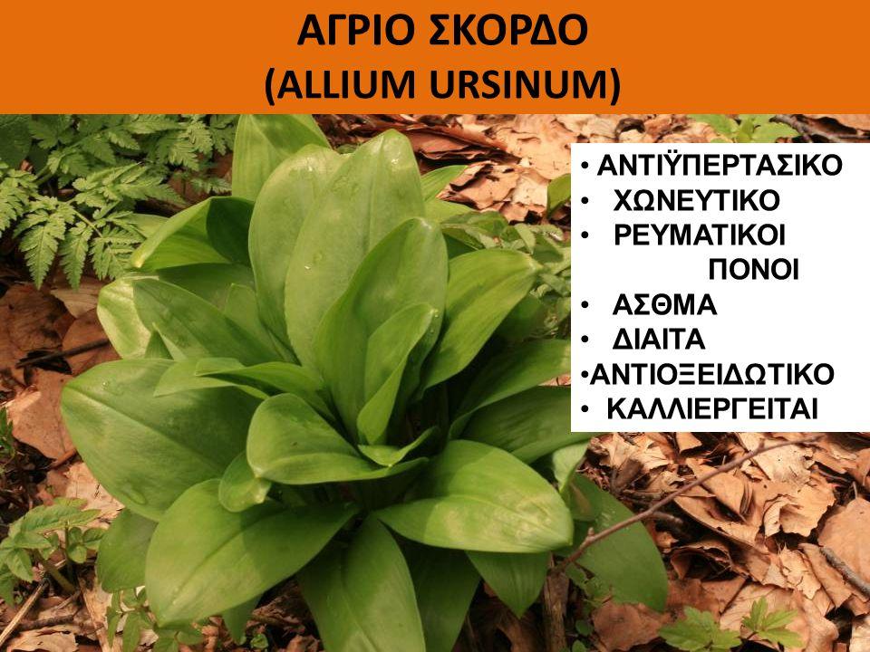 ΚΡΑΤΑΙΓΟΣ (Crataegus sp.) Το βότανο της καρδιάς