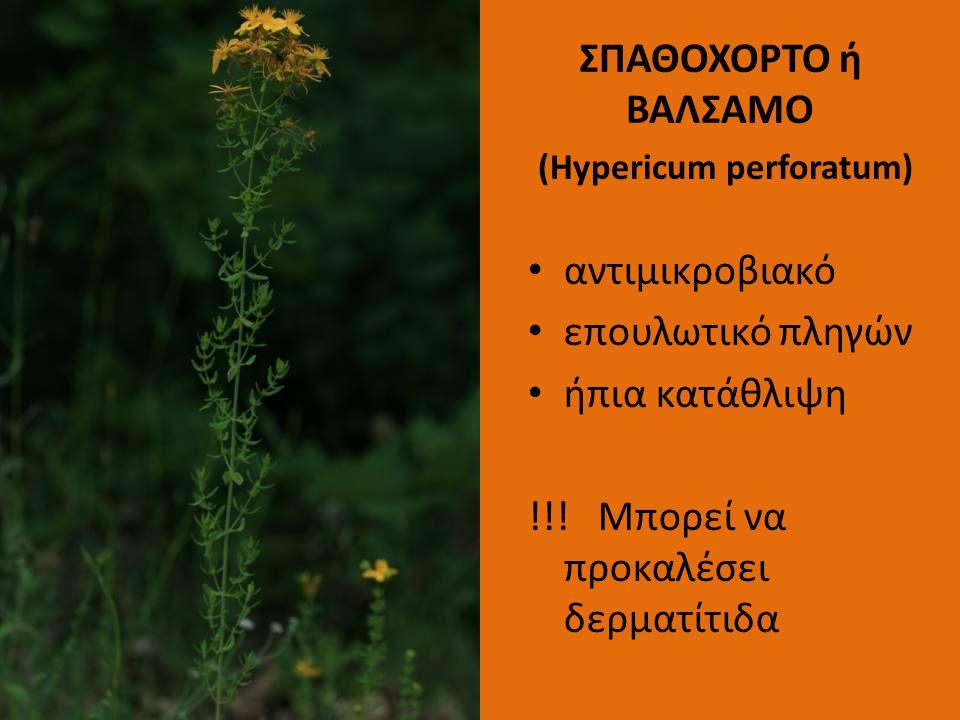 ΣΠΑΘΟΧΟΡΤΟ ή ΒΑΛΣΑΜΟ (Hypericum perforatum) αντιμικροβιακό επουλωτικό πληγών ήπια κατάθλιψη !!! Μπορεί να προκαλέσει δερματίτιδα