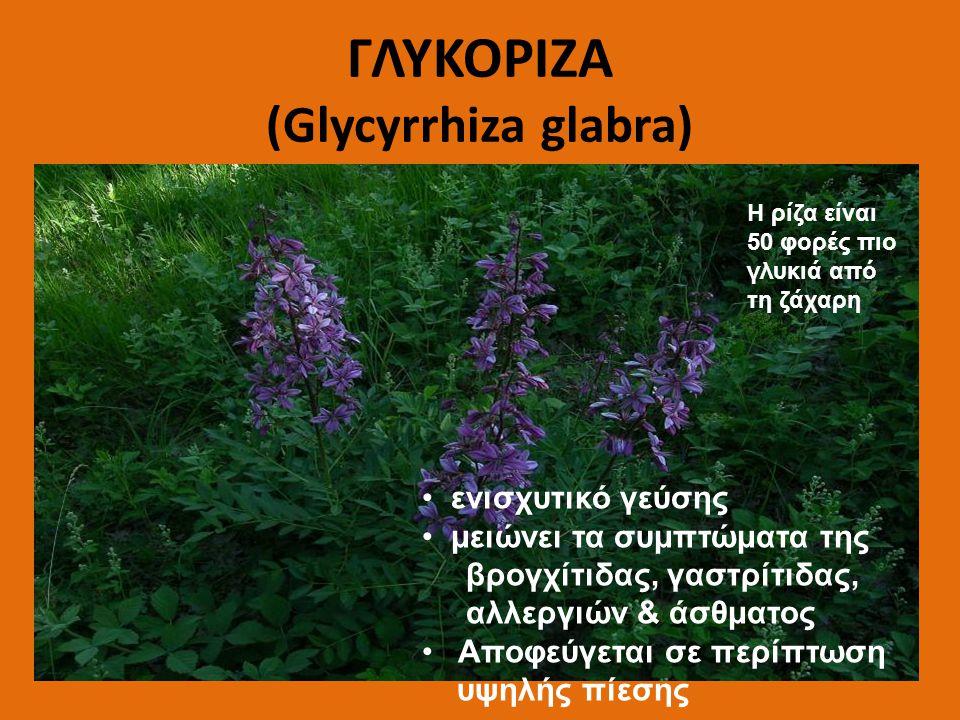 ΓΛΥΚΟΡΙΖΑ (Glycyrrhiza glabra) ενισχυτικό γεύσης μειώνει τα συμπτώματα της βρογχίτιδας, γαστρίτιδας, αλλεργιών & άσθματος Αποφεύγεται σε περίπτωση υψη