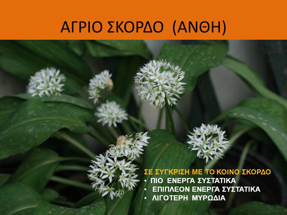 ΗΛΙΟΧΡΥΣΟ-ΣΜΙΛ-CURRY PLANT (HELICHRYSUM ITALICUM) ΑΡΩΜΑΤΙΚΟ- ΠΕΡΙΕΧΕΤΑΙ ΣΤΟ ΑΡΩΜΑ IMMORTILLE ΣΥΣΤΑΤΙΚΟ ΒΕΓΚΕΤΑΣ ΑΜΑΡΑΝΤΟ (ΑΝΘΟΔΕΣΜΗ) !!.
