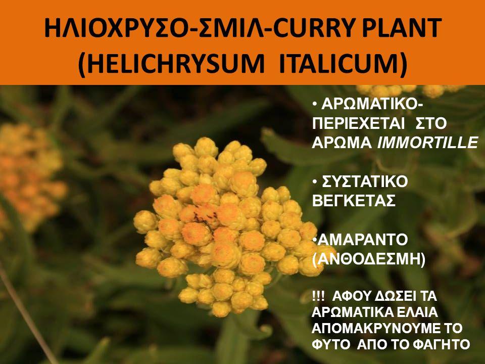 ΗΛΙΟΧΡΥΣΟ-ΣΜΙΛ-CURRY PLANT (HELICHRYSUM ITALICUM) ΑΡΩΜΑΤΙΚΟ- ΠΕΡΙΕΧΕΤΑΙ ΣΤΟ ΑΡΩΜΑ IMMORTILLE ΣΥΣΤΑΤΙΚΟ ΒΕΓΚΕΤΑΣ ΑΜΑΡΑΝΤΟ (ΑΝΘΟΔΕΣΜΗ) !!! ΑΦΟΥ ΔΩΣΕΙ ΤΑ