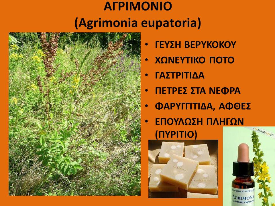 ΑΓΡΙΜΟΝΙΟ (Agrimonia eupatoria) ΓΕΥΣΗ ΒΕΡΥΚΟΚΟΥ ΧΩΝΕΥΤΙΚΟ ΠΟΤΟ ΓΑΣΤΡΙΤΙΔΑ ΠΕΤΡΕΣ ΣΤΑ ΝΕΦΡΑ ΦΑΡΥΓΓΙΤΙΔΑ, ΑΦΘΕΣ ΕΠΟΥΛΩΣΗ ΠΛΗΓΩΝ (ΠΥΡΙΤΙΟ)