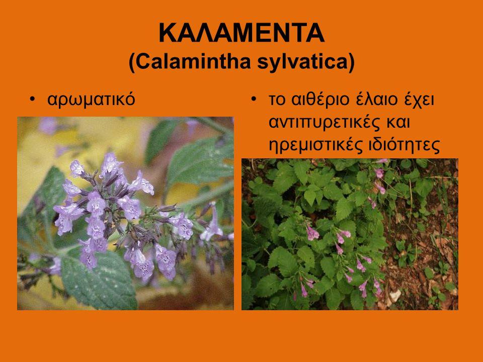 ΚΑΛΑΜΕΝΤΑ (Calamintha sylvatica) αρωματικότο αιθέριο έλαιο έχει αντιπυρετικές και ηρεμιστικές ιδιότητες