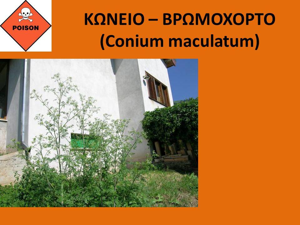 ΚΩΝΕΙΟ – ΒΡΩΜΟΧΟΡΤΟ (Conium maculatum)