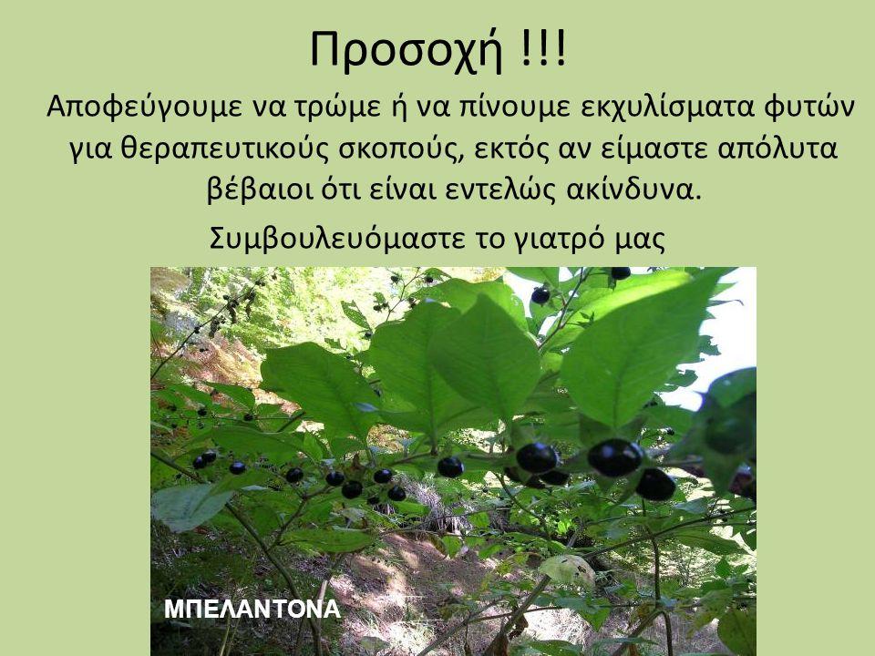 Προσοχή !!! Αποφεύγουμε να τρώμε ή να πίνουμε εκχυλίσματα φυτών για θεραπευτικούς σκοπούς, εκτός αν είμαστε απόλυτα βέβαιοι ότι είναι εντελώς ακίνδυνα