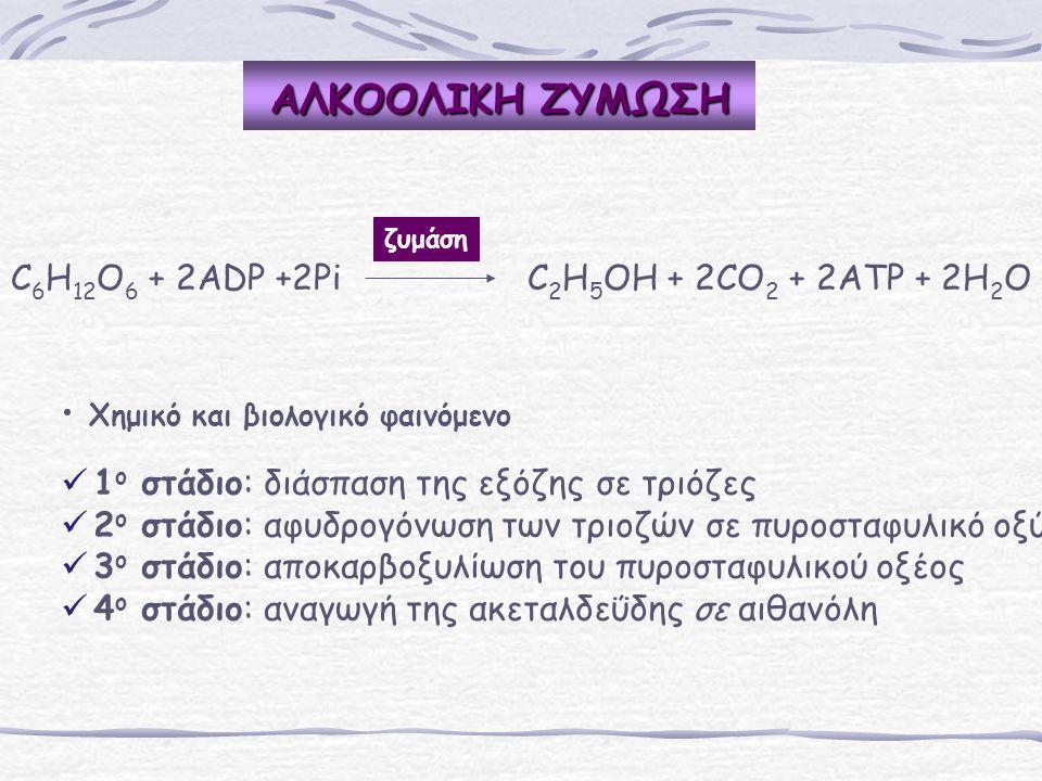 C 6 H 12 O 6 + 2ADP +2Pi C 2 H 5 OH + 2CO 2 + 2ATP + 2H 2 O Χημικό και βιολογικό φαινόμενο 1 ο στάδιο: διάσπαση της εξόζης σε τριόζες 2 ο στάδιο: αφυδ