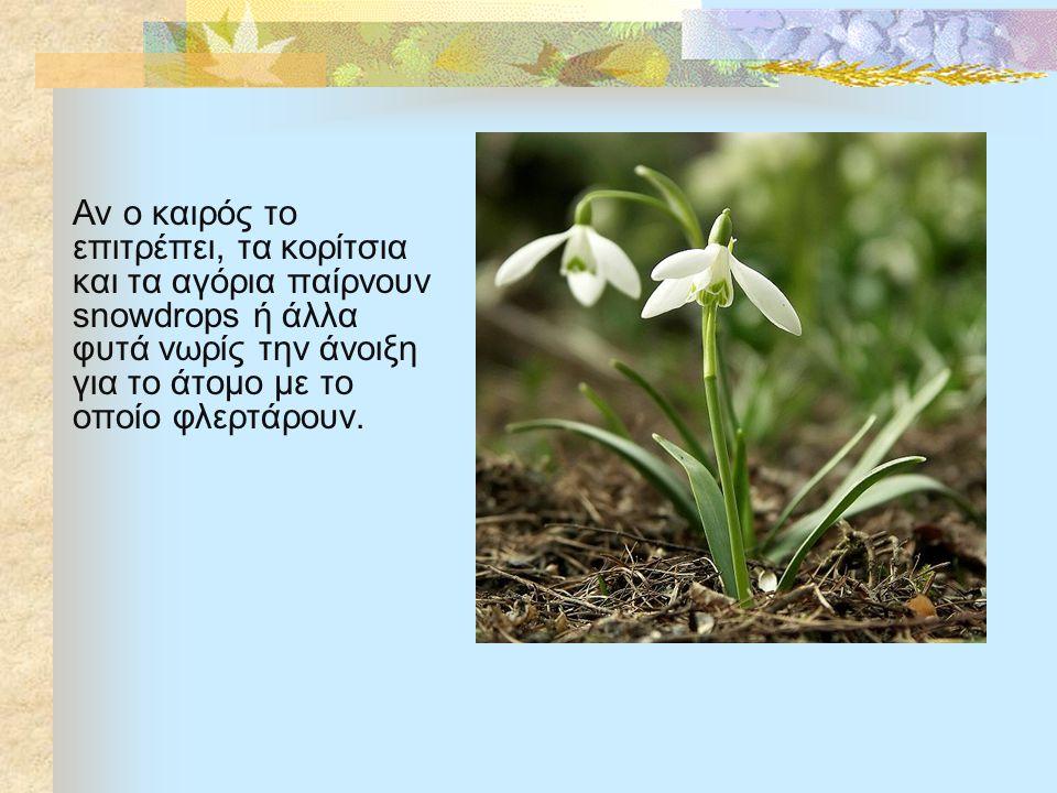 Αν ο καιρός το επιτρέπει, τα κορίτσια και τα αγόρια παίρνουν snowdrops ή άλλα φυτά νωρίς την άνοιξη για το άτομο με το οποίο φλερτάρουν.