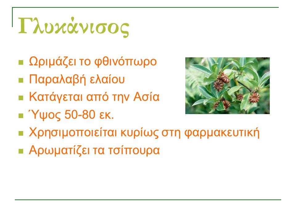 Γλυκάνισος Ωριμάζει το φθινόπωρο Παραλαβή ελαίου Κατάγεται από την Ασία Ύψος 50-80 εκ.