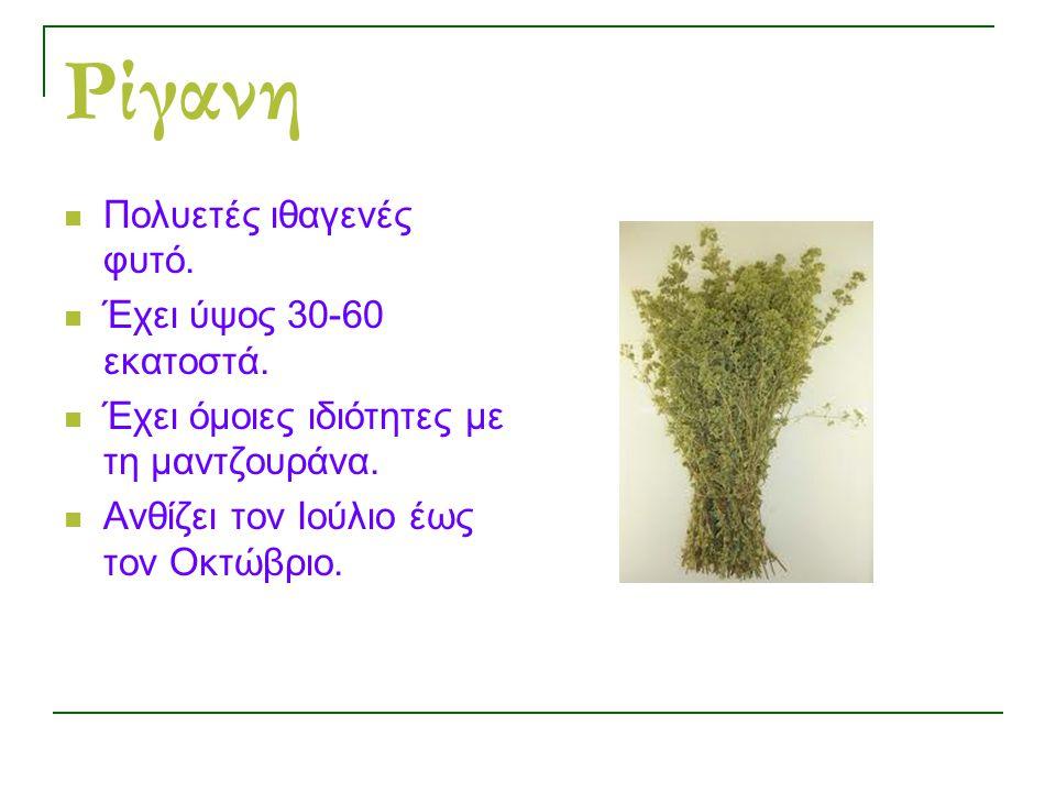 Ρίγανη Πολυετές ιθαγενές φυτό.Έχει ύψος 30-60 εκατοστά.