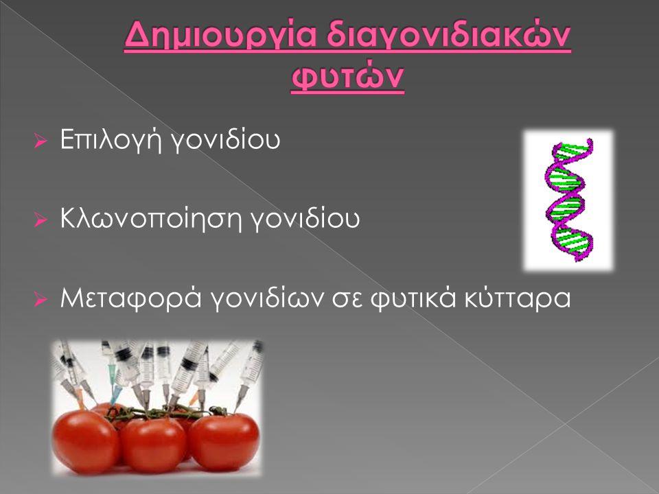  Επιλογή γονιδίου  Κλωνοποίηση γονιδίου  Μεταφορά γονιδίων σε φυτικά κύτταρα