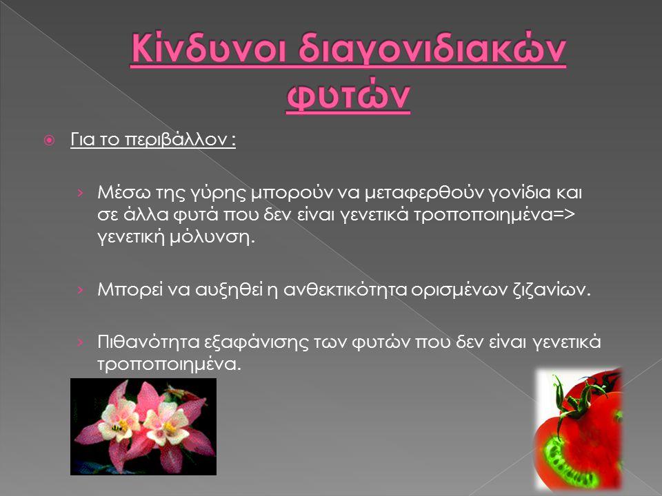  Για το περιβάλλον : › Μέσω της γύρης μπορούν να μεταφερθούν γονίδια και σε άλλα φυτά που δεν είναι γενετικά τροποποιημένα=> γενετική μόλυνση.