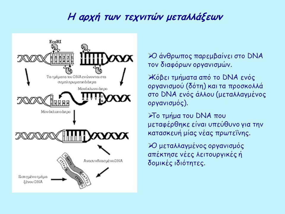 Η αρχή των τεχνιτών μεταλλάξεων  Ο άνθρωπος παρεμβαίνει στο DNA τον διαφόρων οργανισμών.