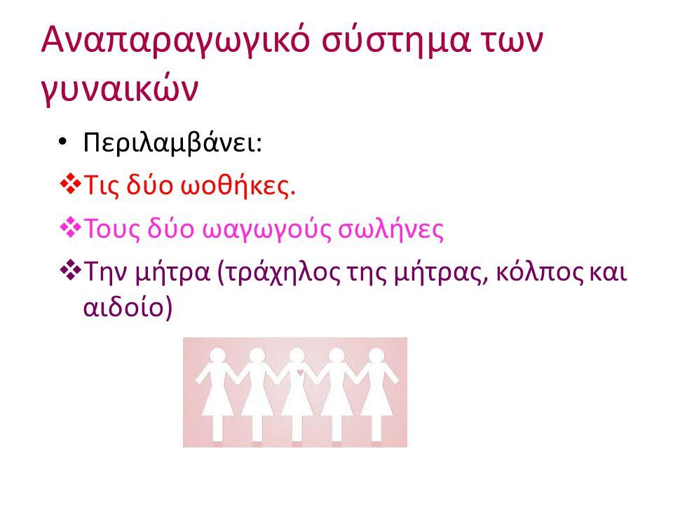 Αναπαραγωγικό σύστημα των γυναικών Περιλαμβάνει:  Τις δύο ωοθήκες.