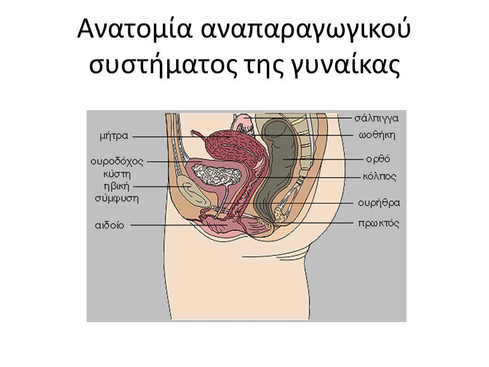 Ανατομία αναπαραγωγικού συστήματος της γυναίκας