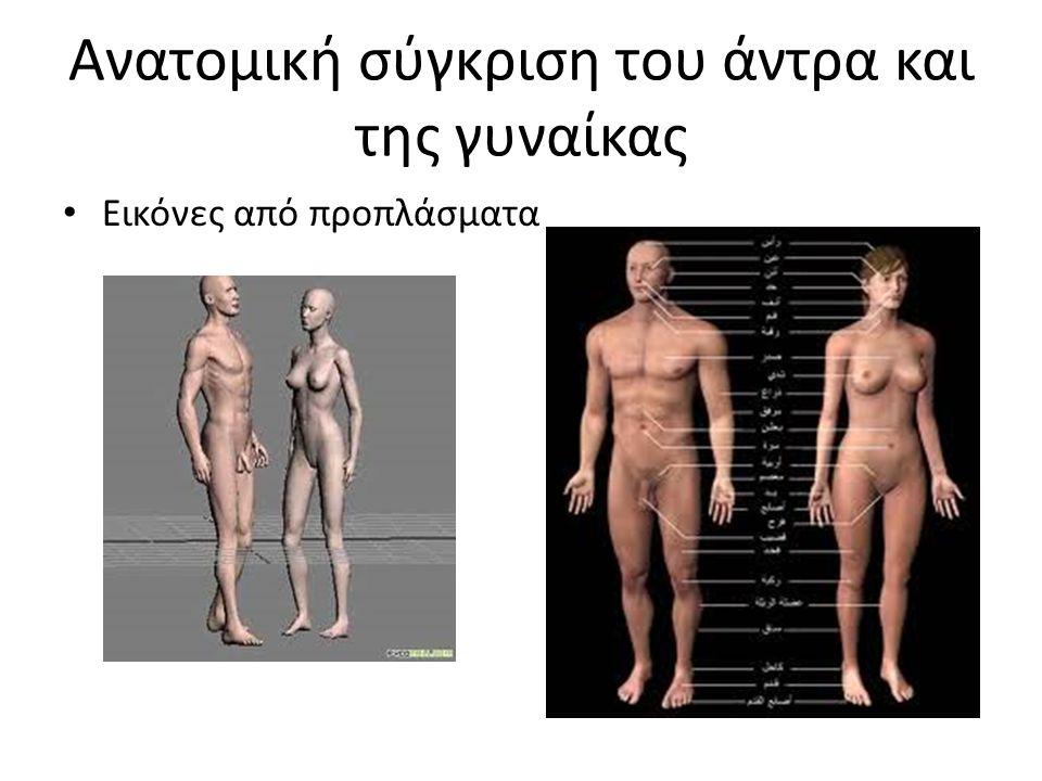 Ανατομική σύγκριση του άντρα και της γυναίκας Εικόνες από προπλάσματα