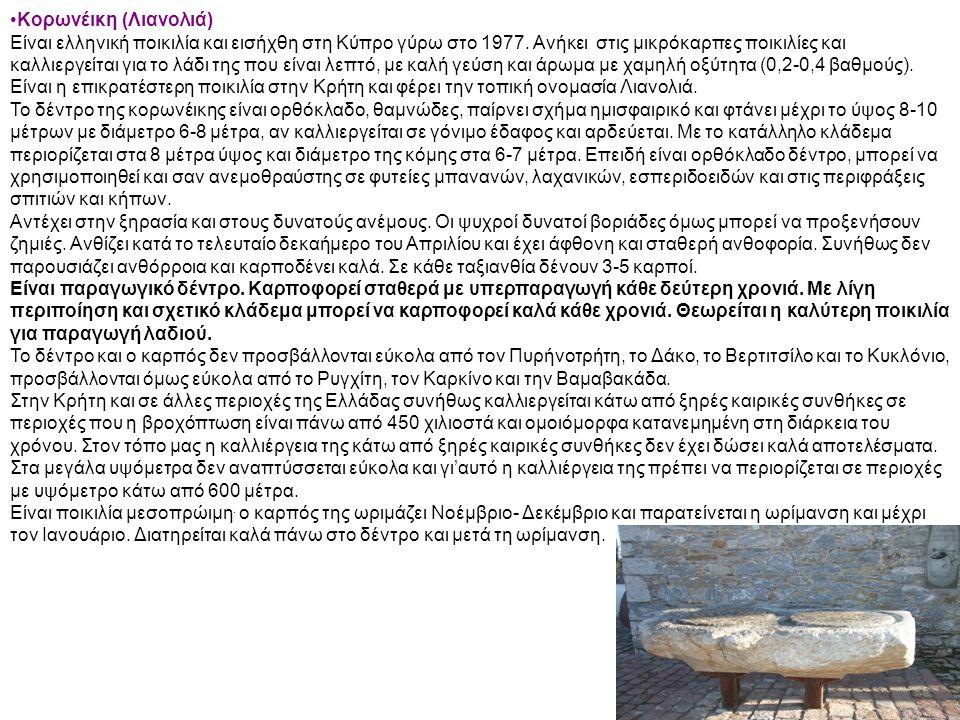 Κορωνέικη (Λιανολιά) Είναι ελληνική ποικιλία και εισήχθη στη Κύπρο γύρω στο 1977. Ανήκει στις μικρόκαρπες ποικιλίες και καλλιεργείται για το λάδι της