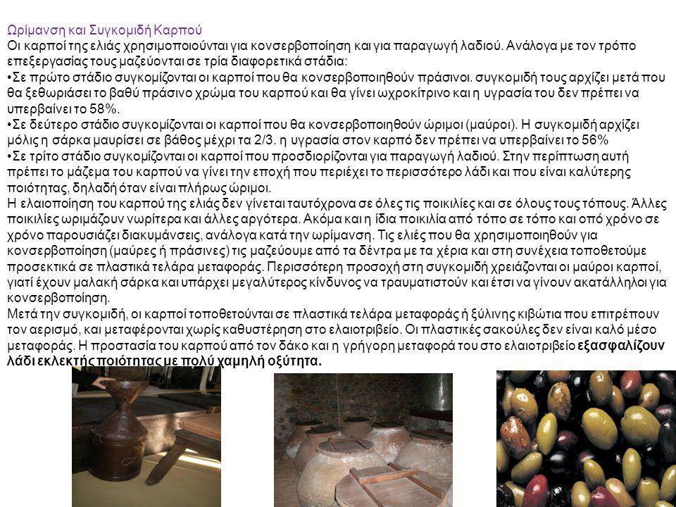 Ωρίμανση και Συγκομιδή Καρπού Οι καρποί της ελιάς χρησιμοποιούνται για κονσερβοποίηση και για παραγωγή λαδιού. Ανάλογα με τον τρόπο επεξεργασίας τους