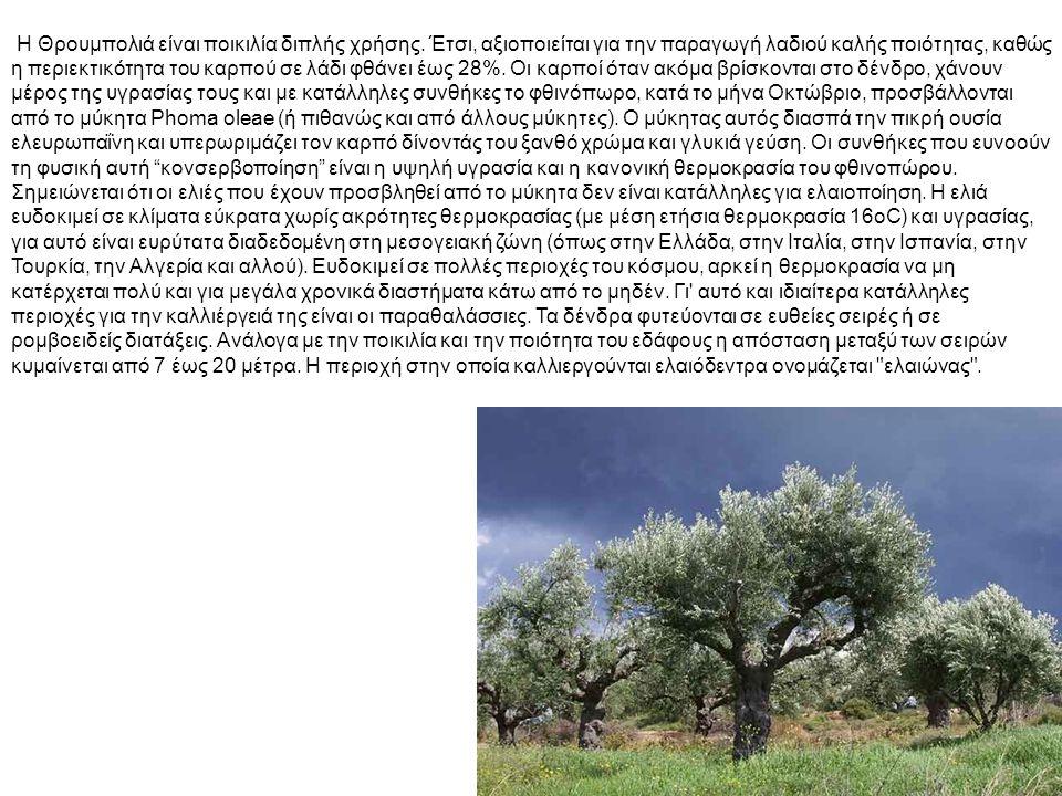 Κορωνέικη (Λιανολιά) Είναι ελληνική ποικιλία και εισήχθη στη Κύπρο γύρω στο 1977.