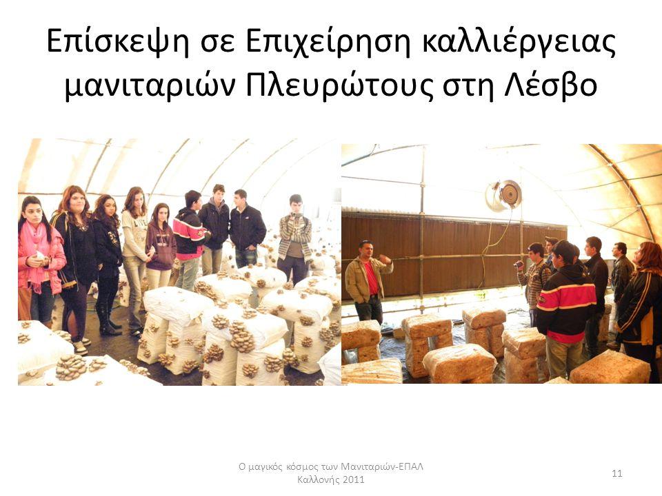 Επίσκεψη σε Επιχείρηση καλλιέργειας μανιταριών Πλευρώτους στη Λέσβο Ο μαγικός κόσμος των Μανιταριών-ΕΠΑΛ Καλλονής 2011 11