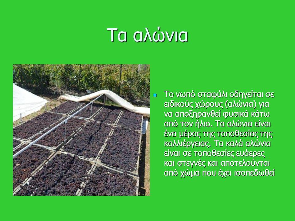 Τα αλώνια Το νωπό σταφύλι οδηγείται σε ειδικούς χώρους (αλώνια) για να αποξηρανθεί φυσικά κάτω από τον ήλιο. Τα αλώνια είναι ένα μέρος της τοποθεσίας