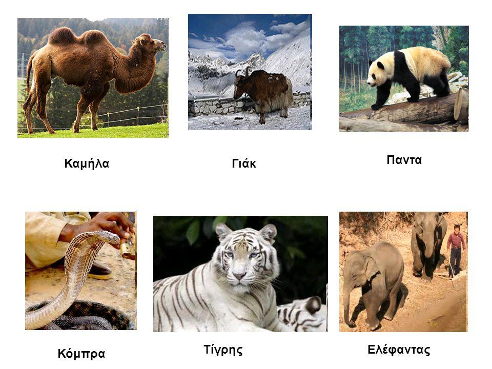 ΚαμήλαΓιάκ Παντα Κόμπρα ΤίγρηςΕλέφαντας
