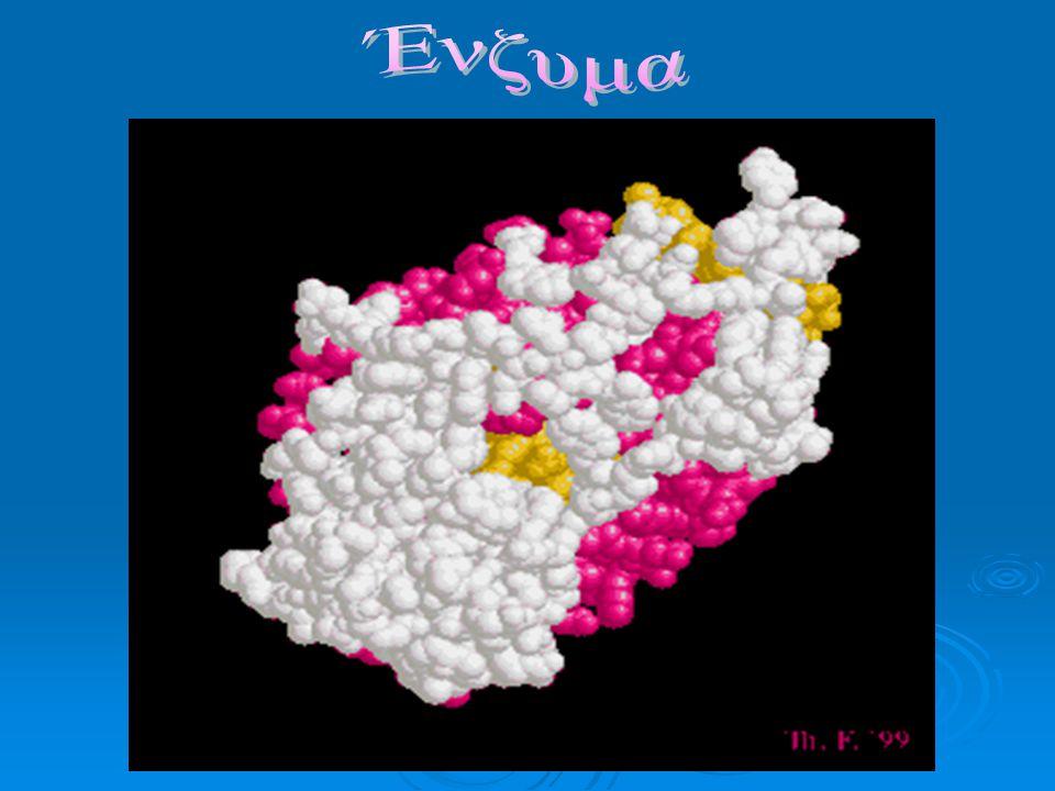 Ένζυμα Ας θυμηθούμε… Τι είναι οι πρωτεΐνες ; Τι είναι οι πρωτεΐνες ; Ονόματα κάποιων από αυτές ; Ονόματα κάποιων από αυτές ; Τι ρόλο παίζουν στον οργανισμό ; Τι ρόλο παίζουν στον οργανισμό ; Έχουν σχέση οι πρωτεΐνες με τα ένζυμα ; Έχουν σχέση οι πρωτεΐνες με τα ένζυμα ; Ποιοι παράγοντες επηρεάζουν τη λειτουργία τους ; Ποιοι παράγοντες επηρεάζουν τη λειτουργία τους ;