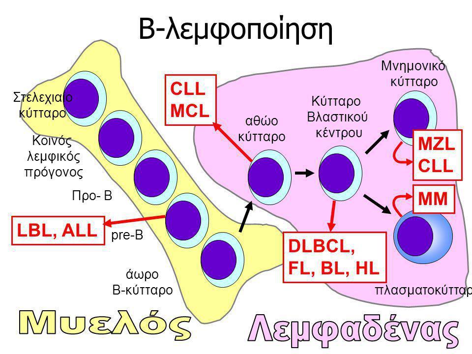 Β-λεμφοποίηση Στελεχιαίο κύτταρο Κοινός λεμφικός πρόγονος Προ- Β pre-B άωρο B-κύτταρο αθώο κύτταρο Κύτταρο Βλαστικού κέντρου Μνημονικό κύτταρο πλασματ