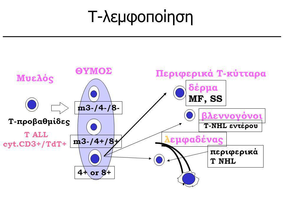Υποθετικά φυσιολογικά κύτταρα: Μυελός ΘΥΜΟΣ T ALL cyt.CD3+/TdT+ m3-/4-/8- m3-/4+/8+ 4+ or 8+ T-προβαθμίδες Περιφερικά Τ-κύτταρα δέρμα MF, SS βλεννογόν