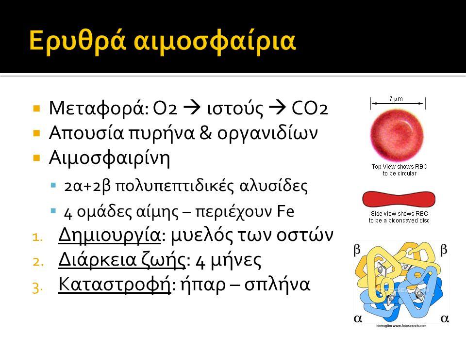 Μεταφορά: Ο2  ιστούς  CO2  Απουσία πυρήνα & οργανιδίων  Αιμοσφαιρίνη  2α+2β πολυπεπτιδικές αλυσίδες  4 ομάδες αίμης – περιέχουν Fe 1. Δημιουργ