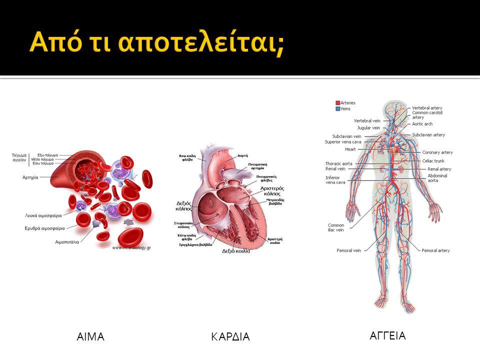 Καρδιά  Καρδιακός μυϊκός ιστός  Καρδιά  αντλία  Αναρροφητική (;)  Συμπιεστική (;)  2 κόλποι – 2 κοιλίες (τετράχωρη καρδιά)  ΚΟΛΠΟΙ: υποδέχονται αίμα  ΚΟΙΛΙΕΣ: προωθούν αίμα  Μεσοκοιλιακό διάφραγμα  Δεξιός κόλπος  Αίμα από σώμα (CO2)  Δεξιά κοιλία  Αίμα σε πνεύμονες (CO2) [πνευμονική αρτηρία]  Αριστερός κόλπος  Αίμα από πνεύμονες (O2)  Αριστερή κοιλία  Αίμα σε σώμα (O2) [αορτή]  Βαλβίδες  εμποδίζουν παλινδρόμηση αίματος ΣΩΜΑ ΠΝΕΥΜΟΝΕΣ ΣΩΜΑ