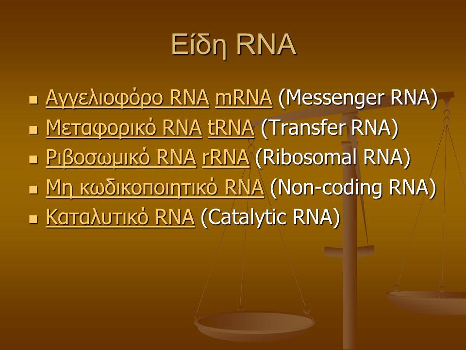 Είδη RNA Αγγελιοφόρο RNA mRNA (Messenger RNA) Αγγελιοφόρο RNA mRNA (Messenger RNA) Αγγελιοφόρο RNAmRNA Αγγελιοφόρο RNAmRNA Μεταφορικό RNA tRNA (Transfer RNA) Μεταφορικό RNA tRNA (Transfer RNA) Μεταφορικό RNAtRNA Μεταφορικό RNAtRNA Ριβοσωμικό RNA rRNA (Ribosomal RNA) Ριβοσωμικό RNA rRNA (Ribosomal RNA) Ριβοσωμικό RNArRNA Ριβοσωμικό RNArRNA Μη κωδικοποιητικό RNA (Non-coding RNA) Μη κωδικοποιητικό RNA (Non-coding RNA) Μη κωδικοποιητικό RNA Μη κωδικοποιητικό RNA Καταλυτικό RNA (Catalytic RNA) Καταλυτικό RNA (Catalytic RNA) Καταλυτικό RNA Καταλυτικό RNA