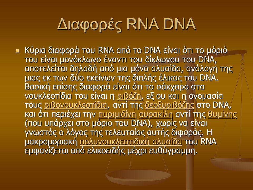 Διαφορές RNA DNA Κύρια διαφορά του RNA από το DNA είναι ότι το μόριό του είναι μονόκλωνο έναντι του δίκλωνου του DNA, αποτελείται δηλαδή από μια μόνο