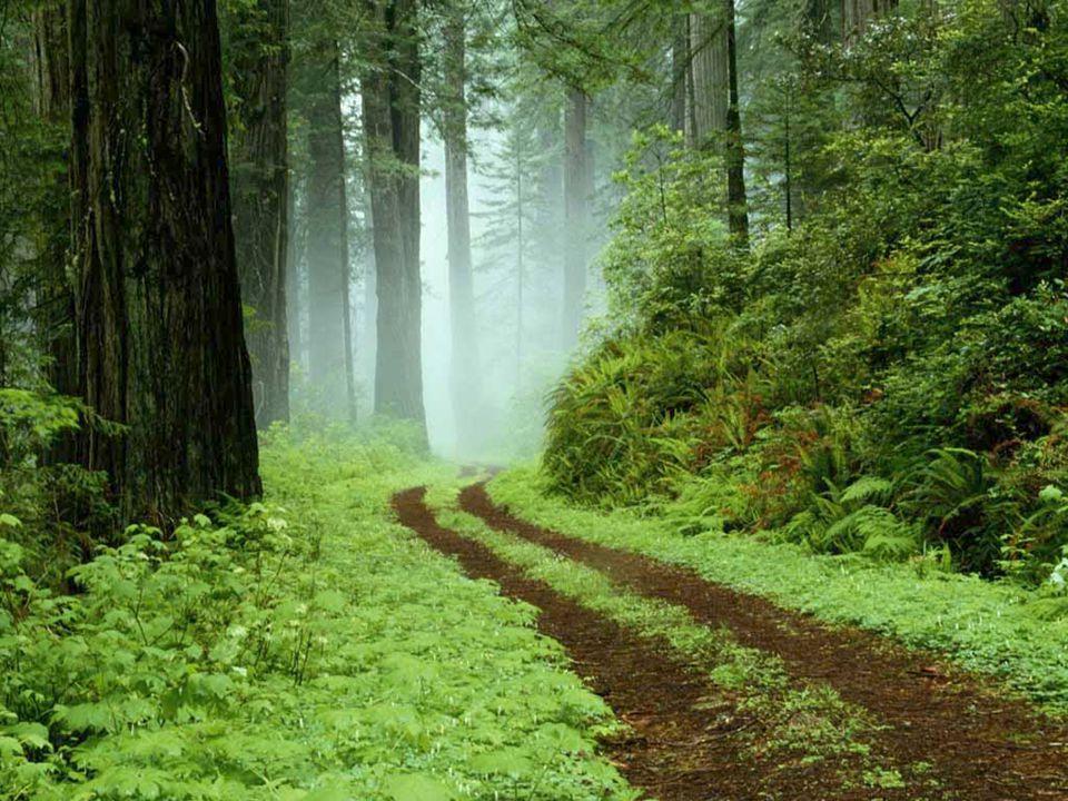 Γεωμορφολογία της Ελλάδας  Η Ελλάδα παρουσιάζει σπάνια ποικιλία δασών σε σχέση με την έκτασή της.