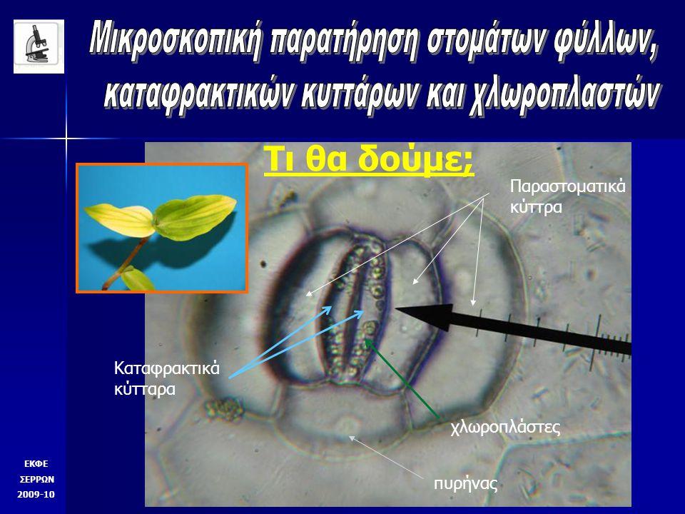 Τι θα δούμε; ΕΚΦΕ ΣΕΡΡΩΝ 2009-10