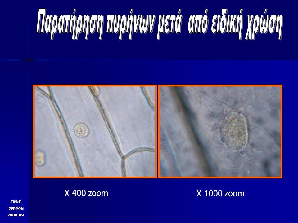 Γλιστρίδα Χ 100 πυρήνες στόματα ΕΚΦΕ ΣΕΡΡΩΝ 2008-09 Εκτός από χιτώνα κρεμμυδιού μπορούμε να χρησιμοποιήσουμε επιδερμίδα φύλλα φυτού.