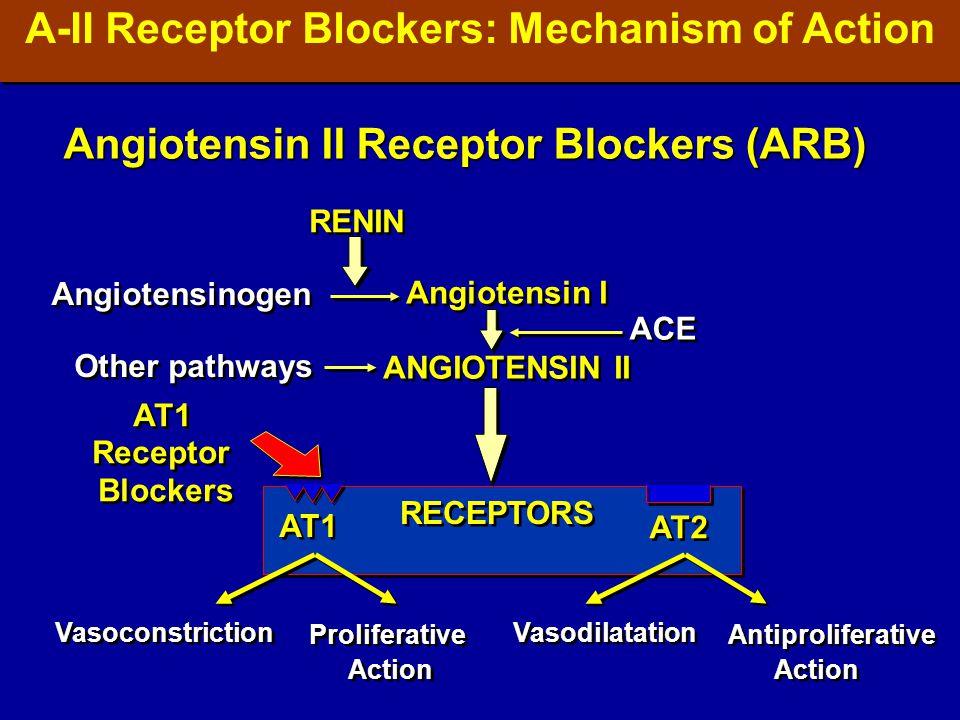 RENIN Angiotensinogen Angiotensin I ANGIOTENSIN II Angiotensin I ANGIOTENSIN II ACE Other pathways Vasoconstriction Proliferative Action Proliferative Action Vasodilatation Antiproliferative Action Antiproliferative Action AT1 AT2 AT1 Receptor Blockers AT1 Receptor Blockers RECEPTORS Angiotensin II Receptor Blockers (ARB) A-II Receptor Blockers: Mechanism of Action