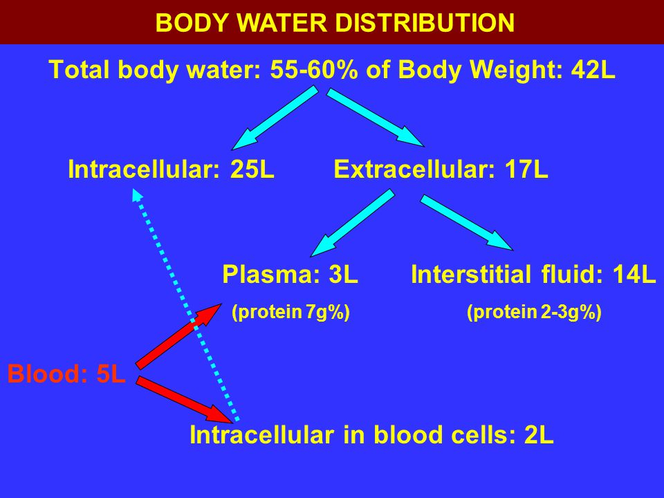 Total body water: 55-60% of Body Weight: 42L Extracellular: 17LIntracellular: 25L Plasma: 3L (protein 7g%) Interstitial fluid: 14L (protein 2-3g%) Blo