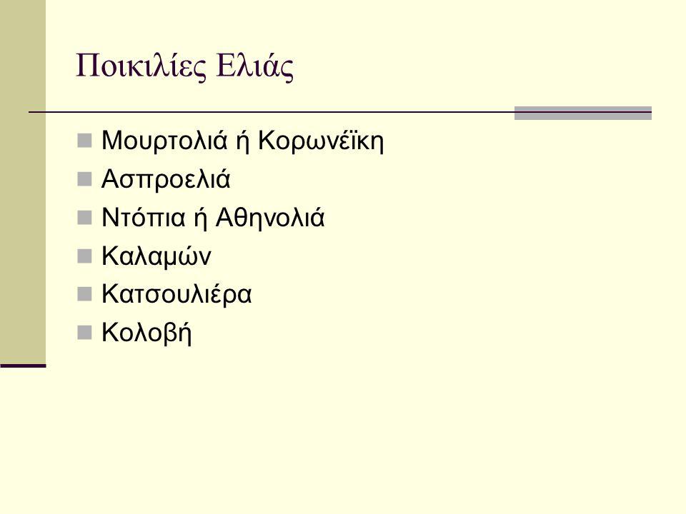 Ποικιλίες Ελιάς Μουρτολιά ή Κορωνέϊκη Ασπροελιά Ντόπια ή Αθηνολιά Καλαμών Κατσουλιέρα Κολοβή